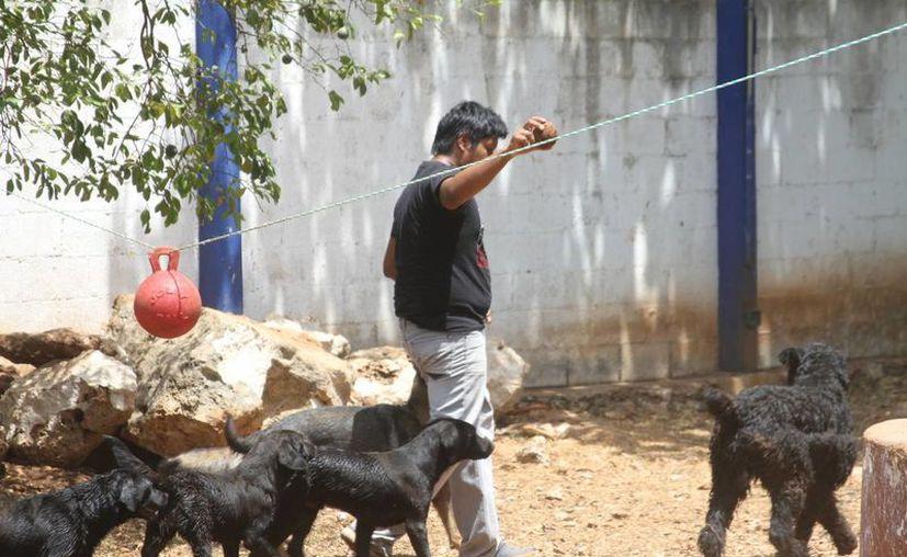 La iniciativa de legisladores yucatecos acerca de que cortes de orejas y colas a mascotas son maltrato animal toma cada vez más fuerza. (SIPSE)