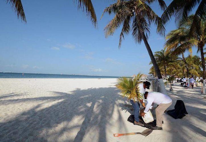 Los voluntarios recogieron colillas de cigarro y plantaron 20 palmas de coco en playa Centro de Isla Mujeres. (Redacción/SIPSE)