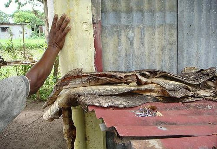 La detección de las pieles de cocodrilo se realizó en el marco de un operativo entre federales y militares. (flickr.com/Contexto)