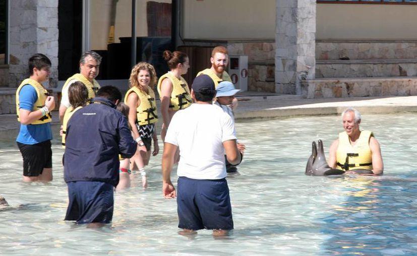 Quintana Roo cuenta con más de 19 delfinarios, de al menos tres empresas como son Delphinus, Dolphinaris y Dolphin Discovery. (Luis Soto/SIPSE)