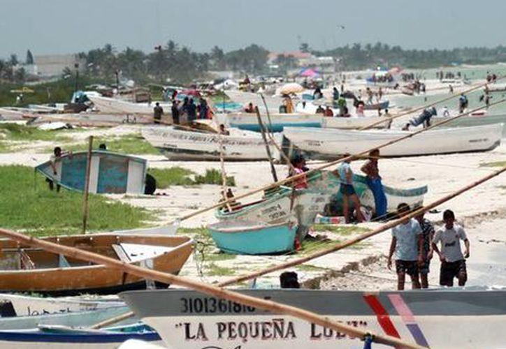 Los pescadores de pulpo reportan baja captura desde que inició la temporada legal de pesca, el 1 de agosto. (Archivo/SIPSE)