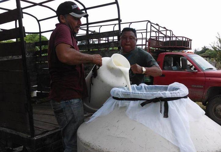 En Reforma han establecido un punto de acopio en el que productores venden sus lácteos. (Javier Ortiz/SIPSE)