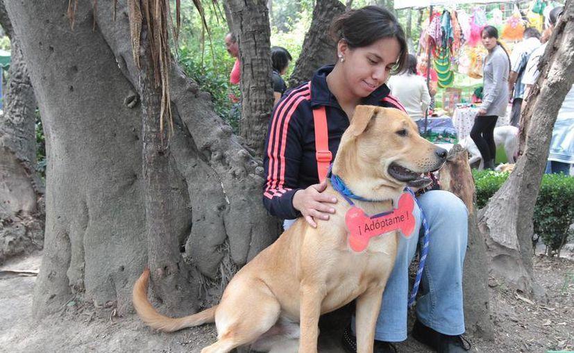 La nueva ley establece que la persona sancionada por maltrato animal no podrá tener mascotas de nuevo. (Archivo/Notimex)