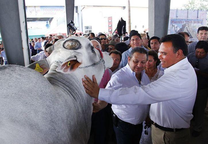 El Gobernador realizó un amplio recorrido por la posta ganadera. (Cortesía)
