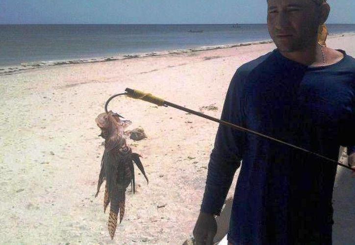 Pescadores de Akumal están preocupados por la proliferación del pez león en las costas de la zona. (Rossy López/SIPSE)