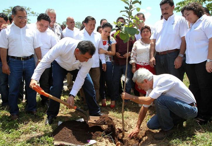 El Secretario de Gobierno Víctor Caballero durante la plantación de árboles. (Milenio Novedades)