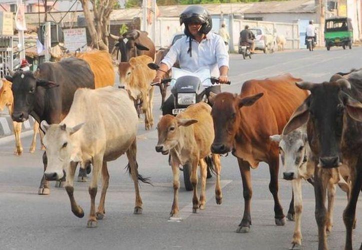 Dijo que los hombres llevaban a los animales a su aldea en el vecino estado de Haryana. (Internet)