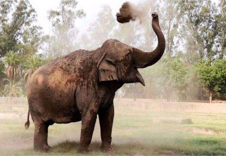 La menor se encontraba con su familia en el parque cuando se disponían a tomarse unas fotografías con los elefantes.  (Wanderley Lagreca)