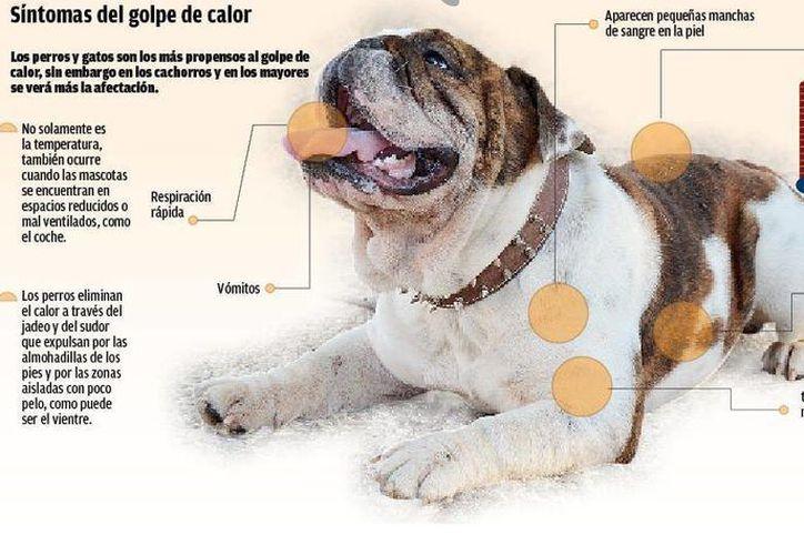 Los perros y los gatos son los más propensos a sufrir los golpes de calor. (Redacción/SIPSE)