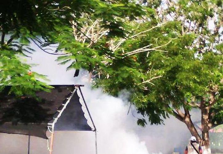 Autoridades recalcan que el mosquito que invadió el norponiente de Mérida no trasmite dengue, chikungunya ni zika. (Milenio Novedades)