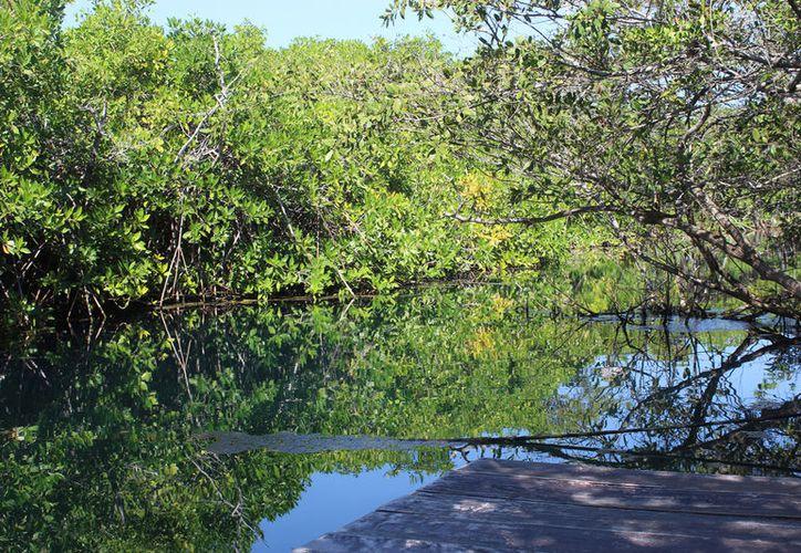 El crecimiento de visitantes a los cenotes aumentó un 50 por ciento. (Sara Cauich)