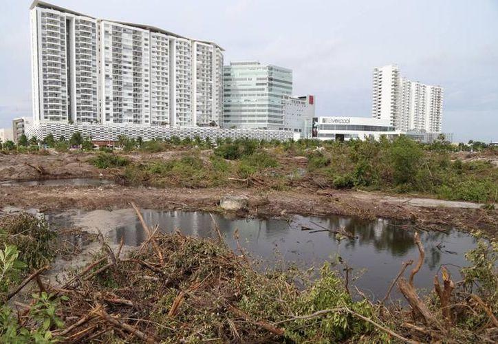 Los ambientalistas denunciaron daño ambiental en Malecón Tajamar. (Redacción)