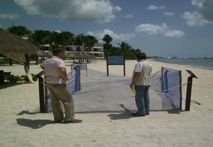 Personal de Profepa realizaron una inspección al Hotel Secrets Aura, en Cozumel. (Foto: Redacción)