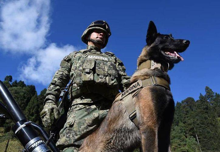Aseguran que que soldados y marinos realizan un gran esfuerzo por recuperar la paz y seguridad de la población. (facebook.com/SEMARMX)