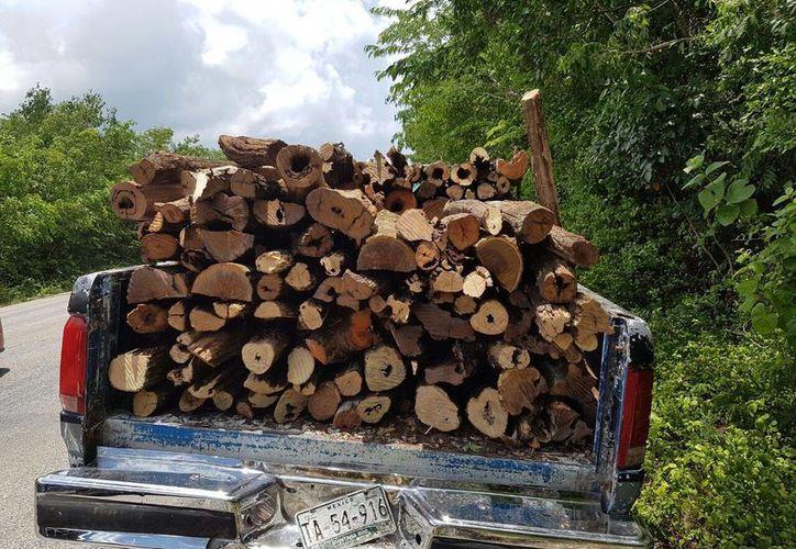 Según los individuos, una persona de nombre Cristian Mendoza, fue quién les habría supuestamente autorizado el aprovechamiento de un árbol. (Irving Canul/SIPSE)