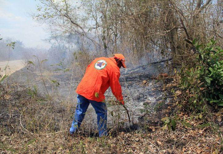 Esta semana, el fuego consumió 40 hectáreas; la maleza es combustible natural. (José Acosta/SIPSE)