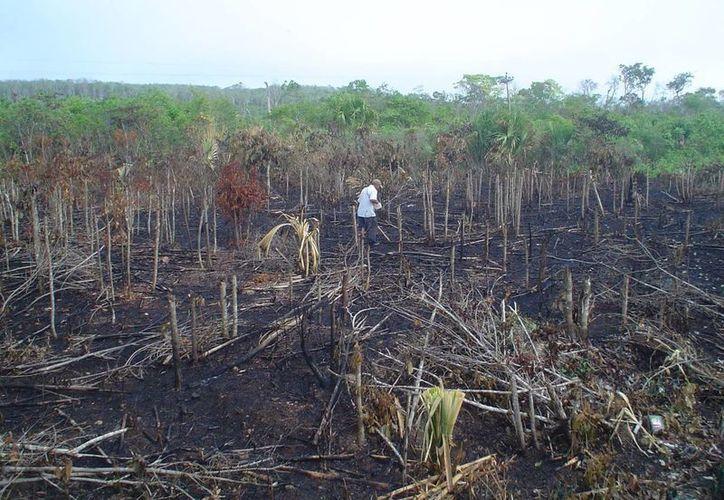 Cada productor puede hacer su propuesta de apoyo hasta para tres hectáreas. (Carlos Yabur/SIPSE)