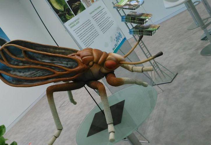 El 80 por ciento de los casos confirmados en Yucatán de la enfermedad transmitida por el mosco Aedes aegypti corresponden a mujeres. (Imagen ilustrativa/ Notimex)