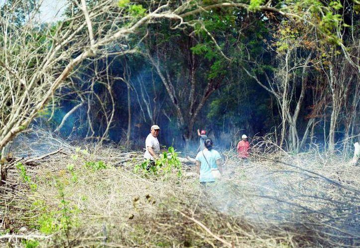 Los invasores ya destruyeron 10 hectáreas de selva baja y alta con diferentes árboles propios de la región. (Milenio Novedades)