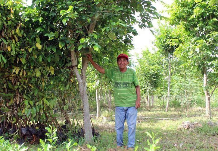 Los programas se aplican en el agro yucateco para mejorar la calidad de vida de las comunidades. (Milenio Novedades)