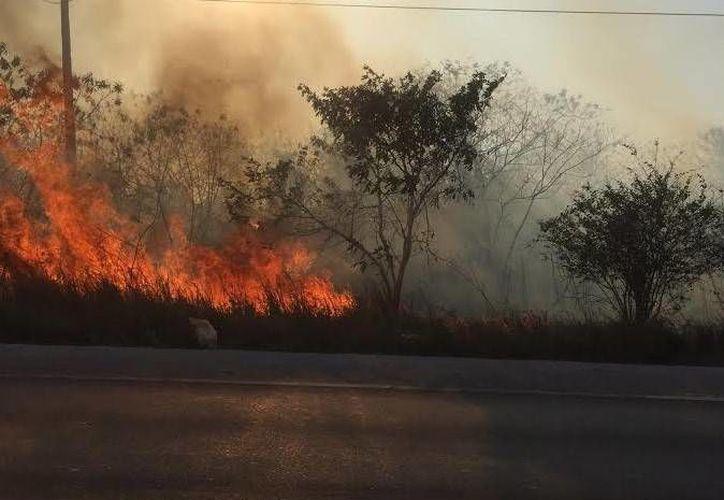 Un incendio justo entre la comisaría de Flamboyanes y Paraíso, Progreso, rumbo a Mérida, se registró este miércoles por la tarde. (Oscar Pérez/SIPSE)