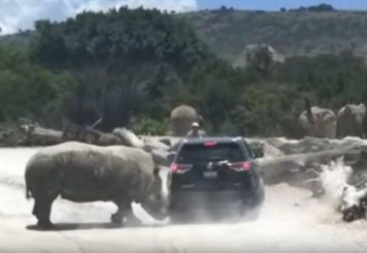 El caso se registró en el parque zoológico Africam Safari de Puebla. (excelsior.com)