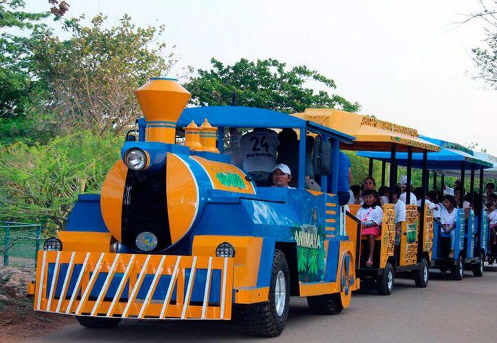 Este domingo, el Expreso Animaya  hizo su primer recorrido. Llevó a niños de Hogares Maná. (Milenio Novedades)