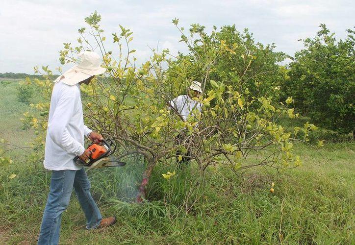 El gobierno del estado otorgó un millón de pesos para sanidad vegetal. (Edgardo Rodríguez/SIPSE)