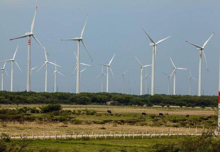A partir de 2016, Yucatán contará con 36 aerogeneradores de energía eólica, pero están por aprobarse más. (Foto de contexto de Notimex)