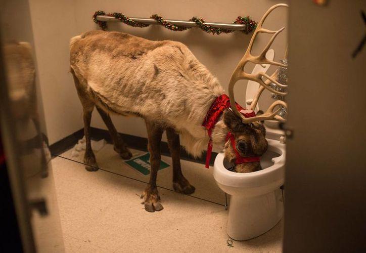 """En el filme """"Fiesta de Navidad en la oficina"""", podrás ver el festejo más salvaje posible. (Foto: Redacción/ SIPSE)"""
