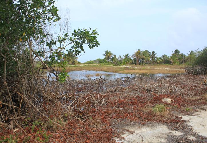 se trata de una zona de manglar o humedales que está sumamente restringida, debido a la densidad que no permite la construcción de ningún edificio. (Daniel Tejada/SIPSE)