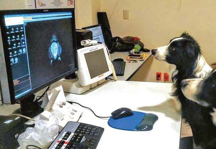 Científicos confirman que los perros procesan los rostros de manera muy similar a como lo hacen los humanos. (Excélsior)