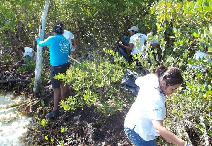 Al finalizar la actividad se contabilizaron 740 de residuos en general. (Facebook/Ecologia-Cancun)