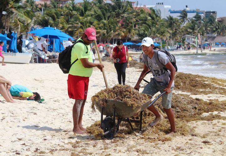 Las playas del centro son las que tienen mayor presencia del sargazo. (Octavio Martínez/SIPSE)