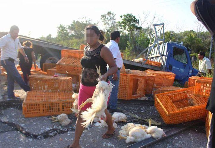 Madres de familia aprovecharon la volcadura para llevarse un pollo gratis. (Benjamín Pat/SIPSE)