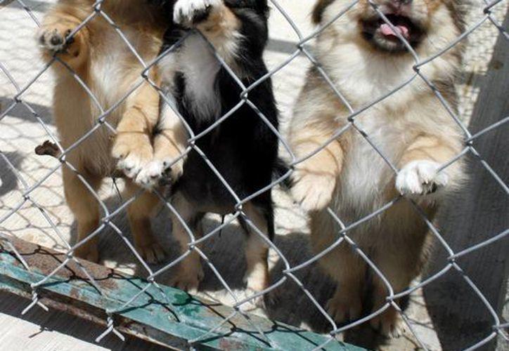 En aumento el abandono de mascotas en los albergues de Mérida. (Milenio Novedades)
