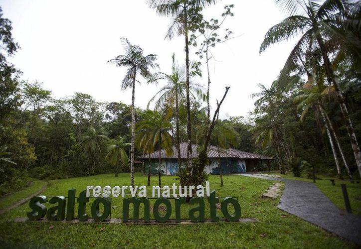 Las reservas naturales privadas tienen entre sus beneficios la captura de carbono y la protección a la biodiversidad. (EFE/Archivo)