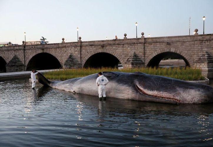 El 'animal' fue atendido por 'científicos' en el Puente de Segovia. (RT)