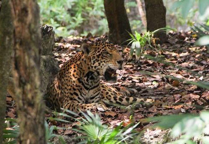 Las autoridades señalan que el comercio ilegal, que trafica especies y plantas protegidas, aqueja la vida silvestre del mundo. (Foto/Ilustrativa)