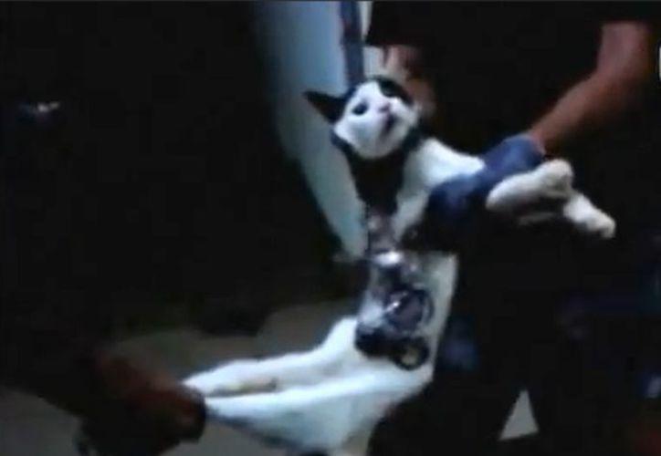 El gato fue detectado la víspera del Año Nuevo. (Youtube)