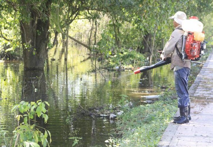 Personal del área de vectores continúa realizando trabajando para evitar los criaderos de moscos. (Archivo/SIPSE)