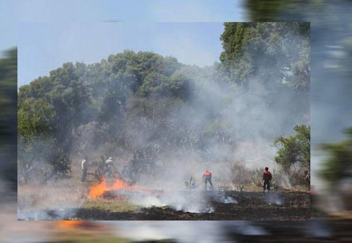 Brigadas forestales trabajan en la contención de incendios en diversas zonas siniestradas en Edomex. (Arturo González/Milenio)