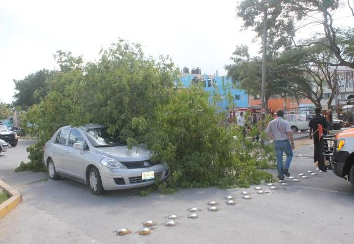 Un árbol cayó encima de un vehículo que era conducido por un turista. No hubo lesionados. (Redacción/SIPSE)