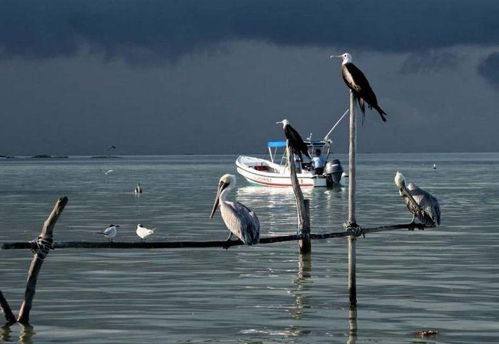 Pescando Sueños puede ser visitada en la galería Víctor Fosado de la Casa de Cultura. (Cortesía/SIPSE)