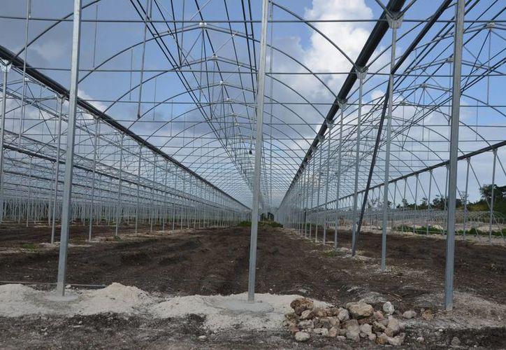 El invernadero medirá siete hectáreas. (Juan Rodríguez/SIPSE)
