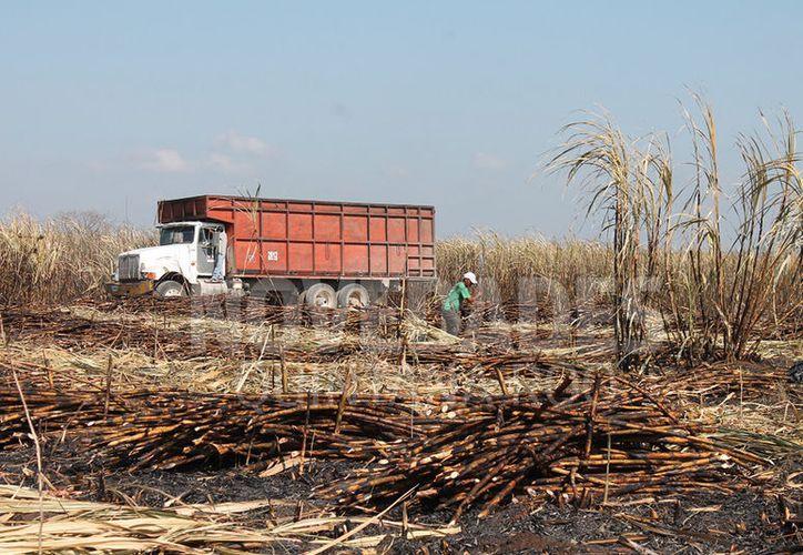 Suspendieron las órdenes de quema y levantaron toda la caña que resultó afectada. (Foto: Juan Rodríguez)