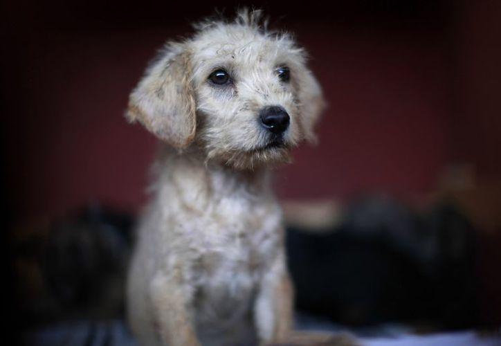 Uno de los perros capturados en el sitio donde fueron encontados los cuerpos. (Agencias)