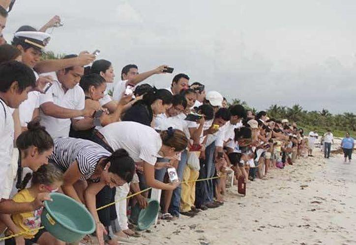 Este año Tulum contará con nueve puntos de anidación de la tortuga marina, protegidos. (Cortesía)