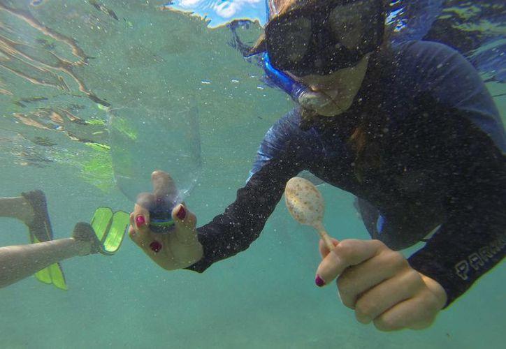 Media tonelada de desechos humanos fueron retirados del fondo del mar de Cozumel el viernes. (Gustavo Villegas/SIPSE)