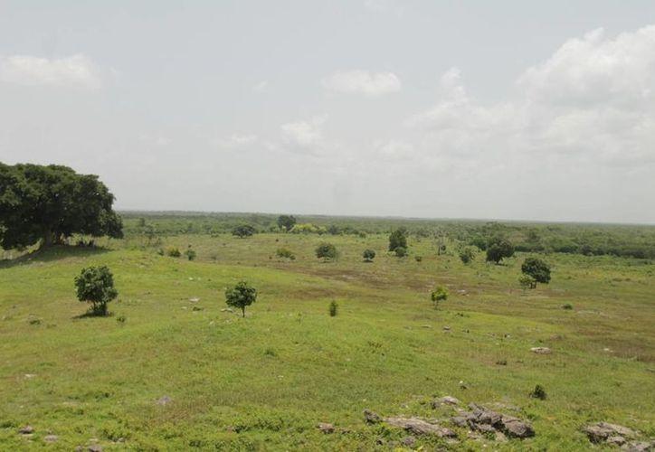 Consideran que la zona selvática de Bacalar cuenta con las características de un ecosistema degradado. (Edgardo Rodríguez/SIPSE)
